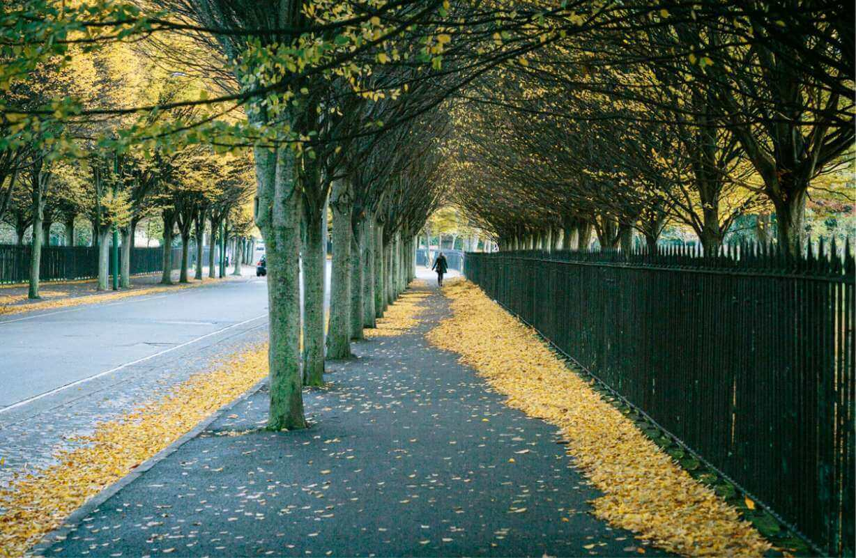 Original Park Railings by Richard Turner at Herbert Park with picturesque autumnal leaves